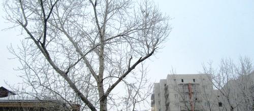 поющие деревья